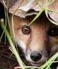 Peeking in on you