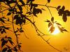 Lovely Sunset ^:^