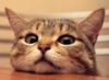 Hello. What ya doing?