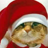 Hi! Merry Christmas! ツ