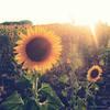 Sun Kissed Beauty