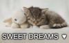 Sweet dreams  ♥ ♥ ♥