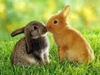 *Bunny Kisses*