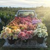 A Truck Full Of Flowers