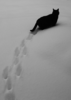 Leaving my paw-prints