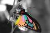 fluttering through ♥