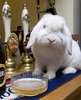 Does some bunny need a beer?