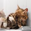 Hugs for my Friend