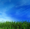 Green Grass _*_ Blue Sky
