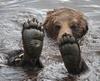 Going Bear Foot