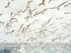 Glorious Birds
