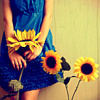 Sunflowers to brighten your day
