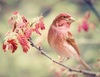A chirpy day to you!