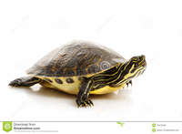 Yellow Slider