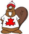 Canadian Beaver